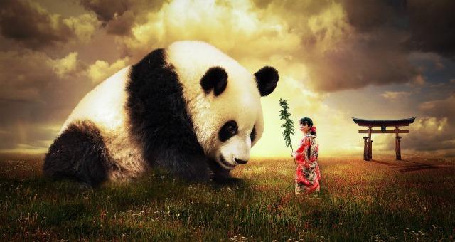 panda-2987596_1920